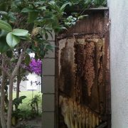 Mission Viejo Bee Removal - Beehive in Backyard Wall