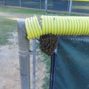 Mission Viejo Bee Removal - Bees Swarm On Fence
